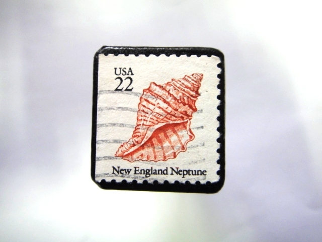 アメリカ 貝切手ブローチ994