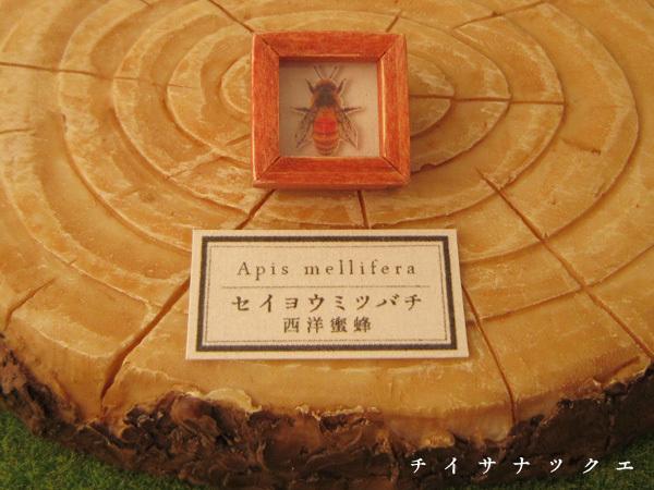 蜂の標本ブローチ