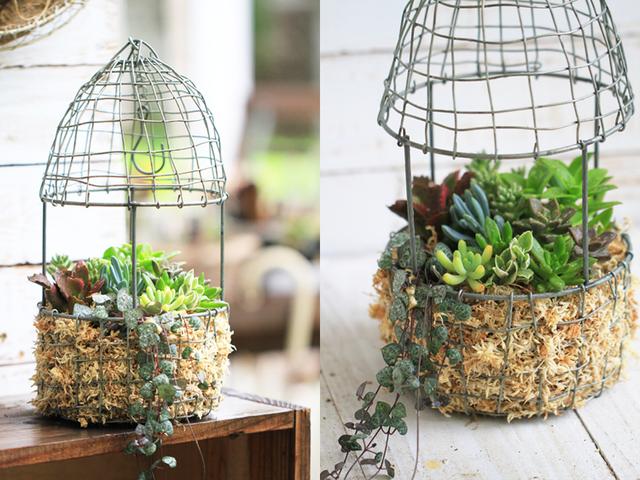 【再販】鳥かごのハートカズラと多肉植物寄せ植え