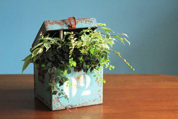 観葉植物のアンティークボックス寄せ植えギャザリング