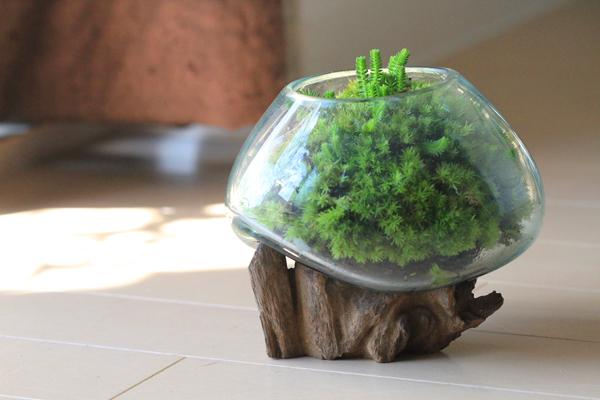 苔テラリウム-流木クラゲガラス-