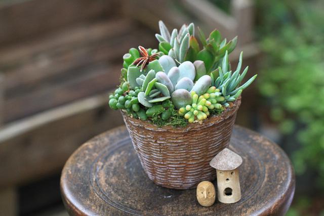 バスケット風陶器の多肉植物寄せ植え