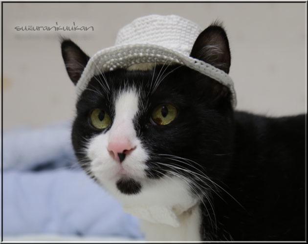 ★受注制作★【猫用】編みシルクハットとリボン付き首輪