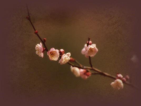 和紙アートフォト【淡い紅梅の枝】