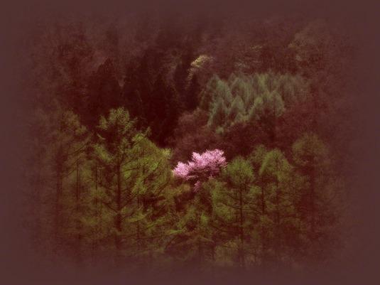 和紙アートフォト【新芽の山と輝く山桜】