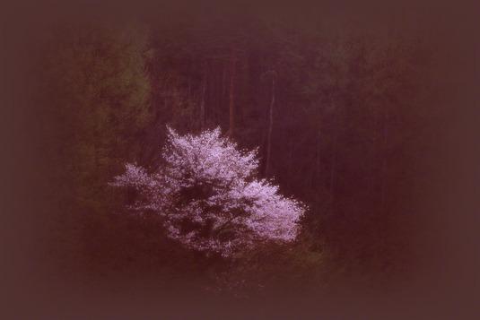 和紙アートフォト【早朝の森の山桜】