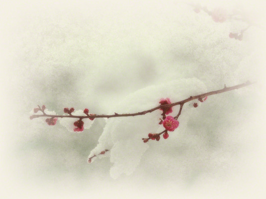 和紙アートフォト【雪を乗せた紅梅】