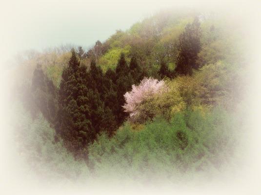 和紙アートフォト【新緑の中の山桜】
