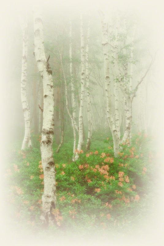 和紙アートフォト【霧の白樺とツツジ】