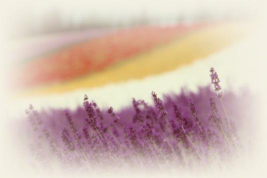 和紙アートフォト【彩りの畑のラベンダー】