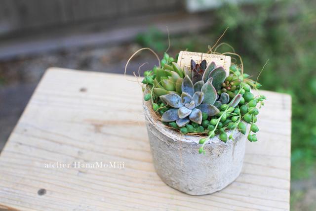 【NEW】シリンダーホワイトモスポット多肉植物寄せ植え