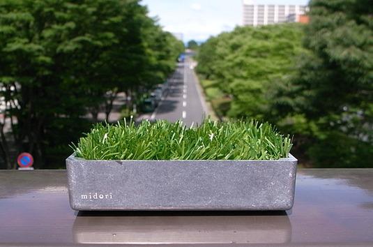 """緑(グリーン)の芝(植物)とアルミの小物入れトレイ""""midori"""""""
