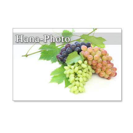 1163) 美味しいブドウ  5枚組ポストカード