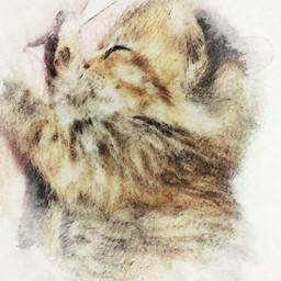 猫のあしあとgalleryさんの作品一覧 ハンドメイドマーケット Minne